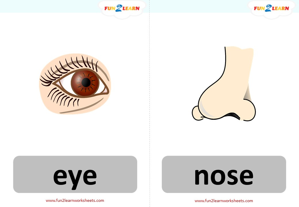 head shoulders knees and toes free flashcards