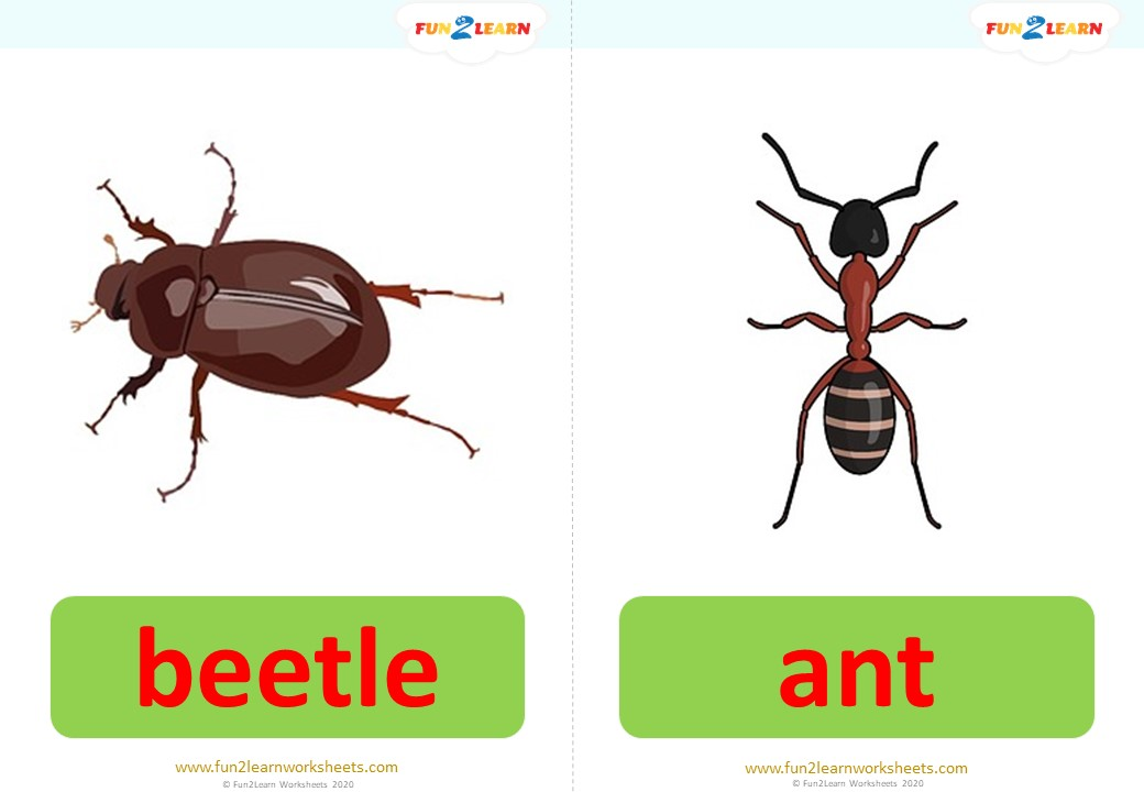 bugs song 2 flashcards